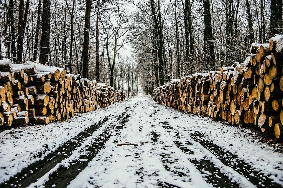 Holzstapel im winterlichen Wald
