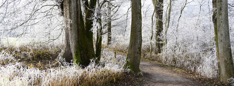 Waldweg mit Rauhreif